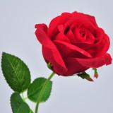 丰舍 情人玫瑰 红色 假花玫瑰花 装饰花白色红色绿色