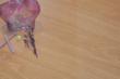 林昌地板--13系列--两全其美EOL1308