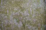 柔然壁纸尔瓦纳112018