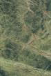 简一雨林绿系列D698813BH