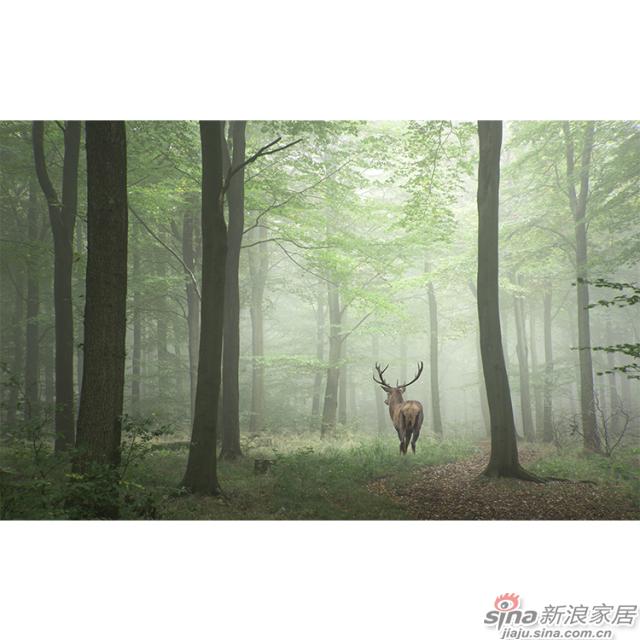 忘忧森林_森林稀疏阳光下麋鹿前行图案自然风光家装\办公室壁画背景_JCC天洋墙布-1