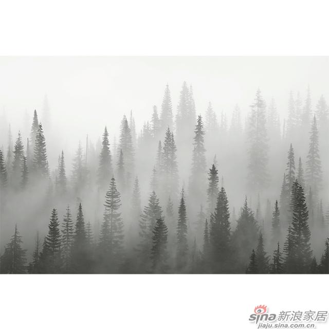 雾朦晨曦_灰色晨雾松林壁画办公室\大厅壁画背景墙_JCC天洋墙布-1
