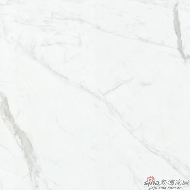 意大利雪花白 Italy snow white-2