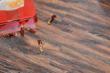 林昌地板--13系列--花团锦簇EOL1307