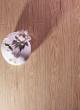 春天地板强化――七彩水晶sj-5
