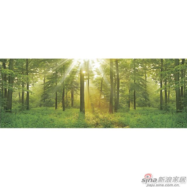 光影绿林_茂密树林里阳光倾泻而下图案壁画办公室、大厅壁画背景墙_JCC天洋墙布-1