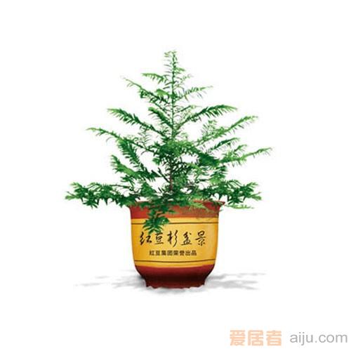 红豆牌红豆杉盆景紫杉二号(高:60CM)防癌抗癌净化空气