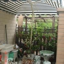 图4:厨房外的小院