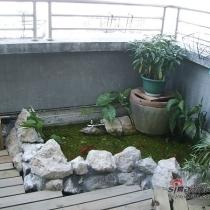 这是大概10平米的露台。在角落DIY了鱼池,垒鱼池的石头是和老公开了车从山中的河里一块块拣来的。洗干净,抬上车,搬到九楼,然后用水泥垒好,用鹅卵石铺底,不停的修补漏水的地方,真是一个浩大的工程。老公还
