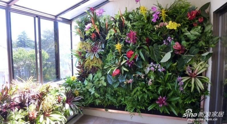 有的别墅或者大户型的阳台,我们可以把阳台打造成一个净化空气的场所,自动水循环系统的植物墙,占地空间小,立体垂直绿化,绿化密度大,观赏效果强,给室内打造一个绿植园式的休闲场所!