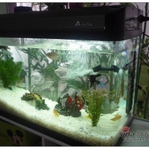 LG最爱的鱼缸,里面养了好多热带鱼哦,小小的鱼很贵的说