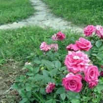 花园一角。