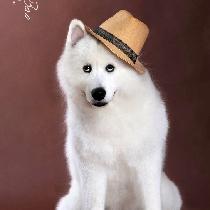 宠物模特QiBao