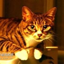 最后一张,让我们家的小帅猫来露个脸
