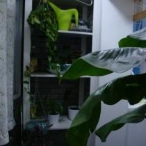 阳台,花架是装修工人做的!成本不比宜家便宜,还不如在宜家买呢!呵呵~