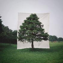 树肖像--不同的季节和地点所展现出的美。