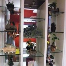 老公买的小植物