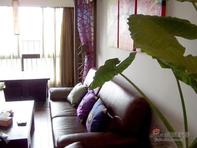 本来的面目:靠垫,隔断帘都选用了极度鲜艳的颜色。并且把厅摆的满满的,家的感觉就来了
