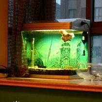 飘窗上悠然自得的热带鱼