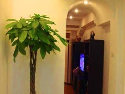 """买了棵""""大树""""放门口转角处,效果还不错"""