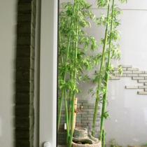 书房看花园,就为了那点绿色。(竹子是假的,绿的很真。)