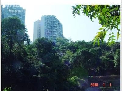 树木还挺繁茂,阳光倾泻,穿过林子,那光线真漂亮
