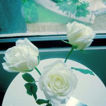 三支白色的玫瑰,可以让心情好上许多天