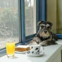 发一张我们的狗狗阿布在窗台上的照片,还有丰盛的早餐,当然早餐是给人吃的
