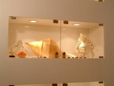 展示柜有我多年收藏的贝壳