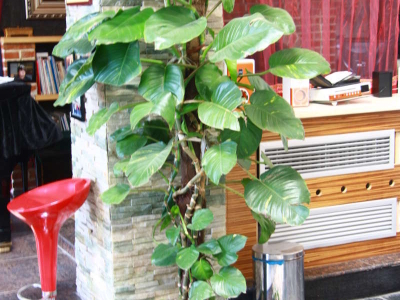 植物直接种在地上,可以接地气