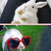 可爱的小兔子