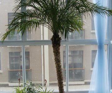 阳台的前世今生之今生---这是现在的,阳台上还有两只鸟没拍到,后面窗外的白点点是雪。我家阳台有三个,一个大阳台,就是这个,做休闲阳台了。卧室外有一个小的用来晾衣服,厨房外的生活阳台放拖把什么的。阳台多