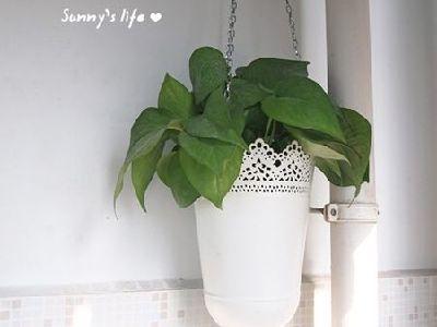 漂亮的花瓶,给你好心情。