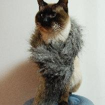 【萌宠召集】粘粘是只好猫