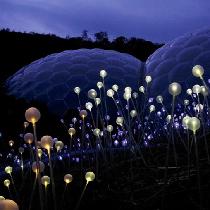 夜里怒放的花朵---光之林