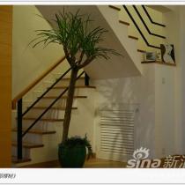 楼梯(一直很欣赏那棵树)