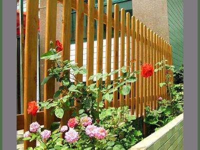 露台边上的玫瑰花……