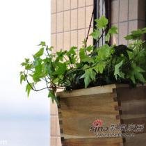 植物和白色花盆都是钱江花鸟市场买的,木头花盆是宜家买的。幸福树180大米,其他差不多5~20米不等。