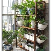 很喜欢的阳台花架,同样来自淘宝