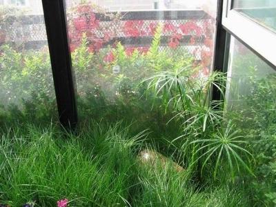 花园里的草