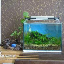 地柜上的小鱼缸