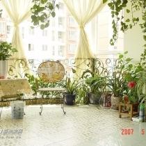 阳台.植物