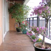 开满鲜花的阳台,阳台就是这样,摆几盆花就有生气很多,不用怎么装修