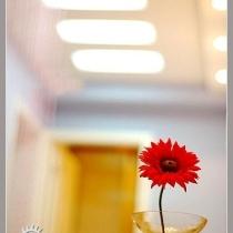 以灿烂的向阳花作为封面,小家秀正式开始拉