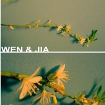 为了清新空气的吊兰开花了