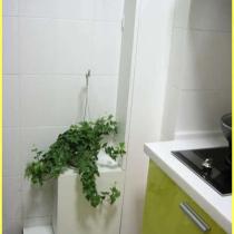 厨房中的一点绿,我的天然气表和管道就藏在里面,随时可以打开,就象开抽屉一样