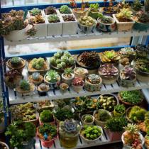多肉植物的几种种植方法