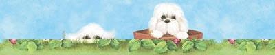 布鲁斯特壁纸腰线美丽天使0098700987