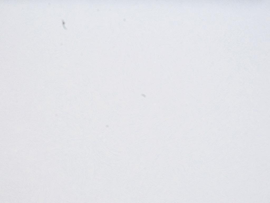 格莱美3903-3童话壁纸3903-3
